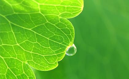fix atmospheric nitrogen to leaf