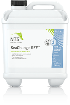 seachange kff
